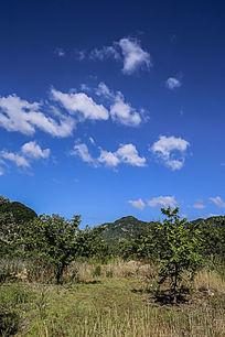 蓝天白云竖片