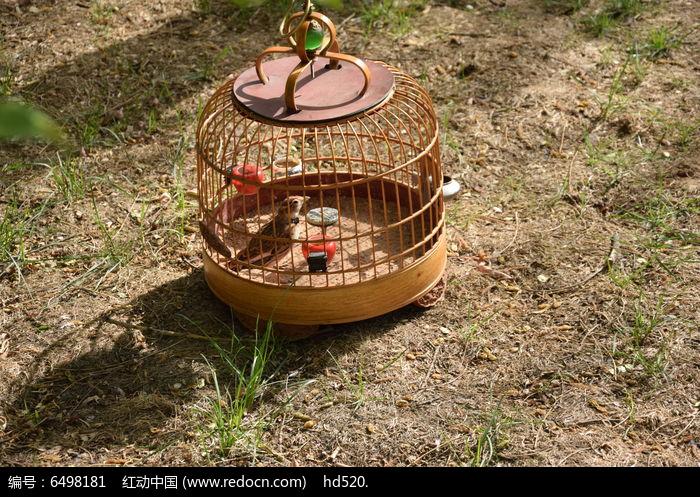 鸟类笼子图片图片