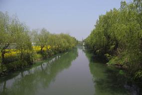 乡村小河柳树绿