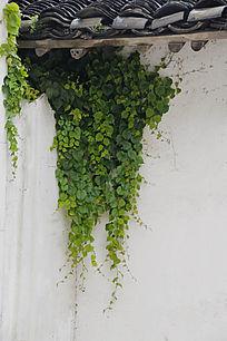 房檐绿色植被
