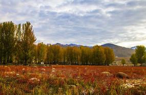 稻城亚丁红草地