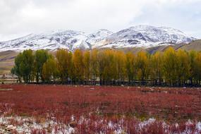 高原红草地