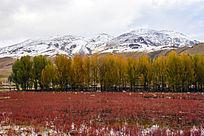 雪域红草地