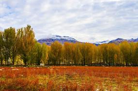 红草地之秋韵