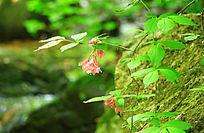 绿苔石头野花