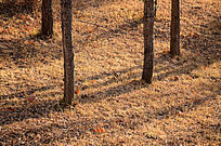 冬日阳光照耀下的草地和四棵树干