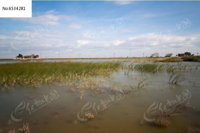 辽阔的原生态湿地图片