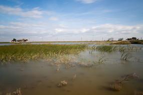 辽阔的原生态湿地