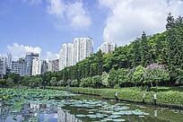 深圳大学荷花池