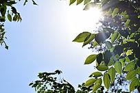 阳光下的绿叶摄影