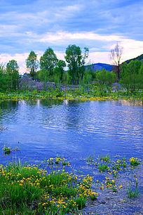 沼泽水塘野花