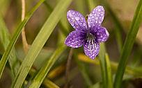 绿草下的小花