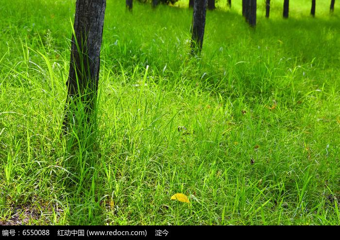 初夏阳光下的草地和小树林图片