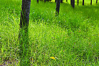 初夏阳光下的草地和小树林