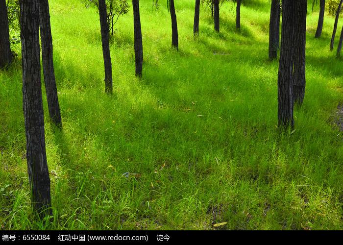 初夏阳光下的小树林和绿葱葱的草地图片