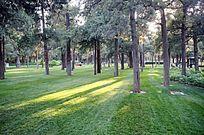 公园清晨草地
