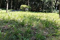 公园小草坪