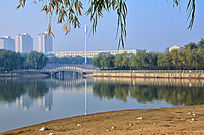 湖边的垂柳远处的小桥和居民楼