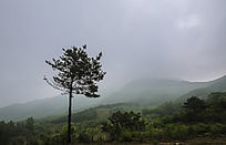 浓雾笼罩的山丘