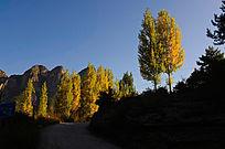 秋天山里的金色杨树风景照