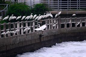 一群休息的白鹭鸟