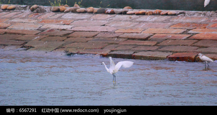 白鹭鸟厦门市鸟图片