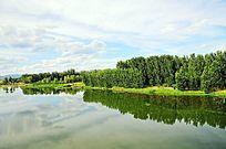 水边的树林