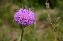 一朵盛开的紫色小花朵