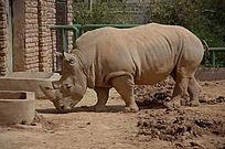 动物园里的一只犀牛整体照
