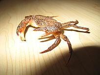 木板上的螃蟹