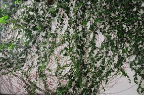 绿植背景墙
