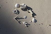 沙滩上的珊瑚和贝壳