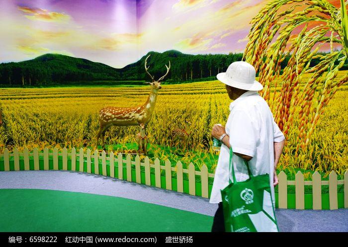 金色稻田壁纸和农民图片