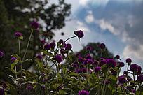 蓝色天空下紫色的花
