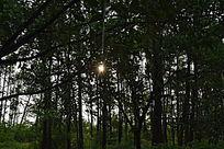 傍晚的林间摄影