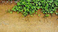公路藤蔓植物
