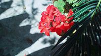 红色花朵绿色叶子