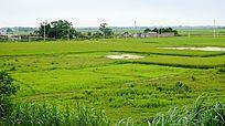 乡村绿色田野