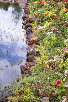 清澈河水邊的彩色鮮花