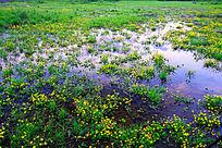 湿地水塘花草