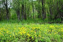 湿地野花风景