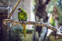 琢木鸟图片
