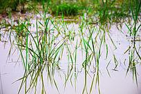 水中绿草和倒影