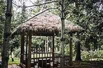 林间的茅草亭