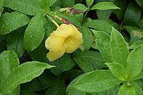 雨中的小黄花图片特写
