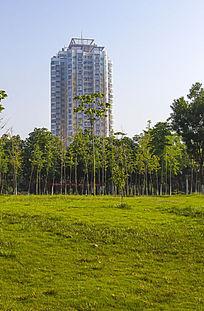 草坪与高楼
