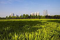 草坪与群楼