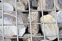 石头贝壳背景