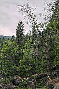 树林石头风景图