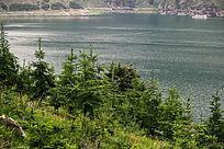 新疆青山绿草大海风景图